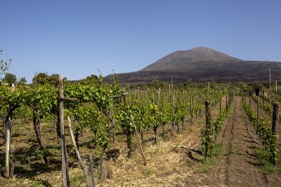 Pompeii & Wine Tasting Gold